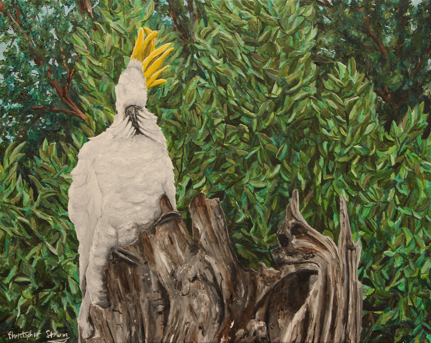 Cocky standing in the wind - Oil on canvas - 50cm x 40cm