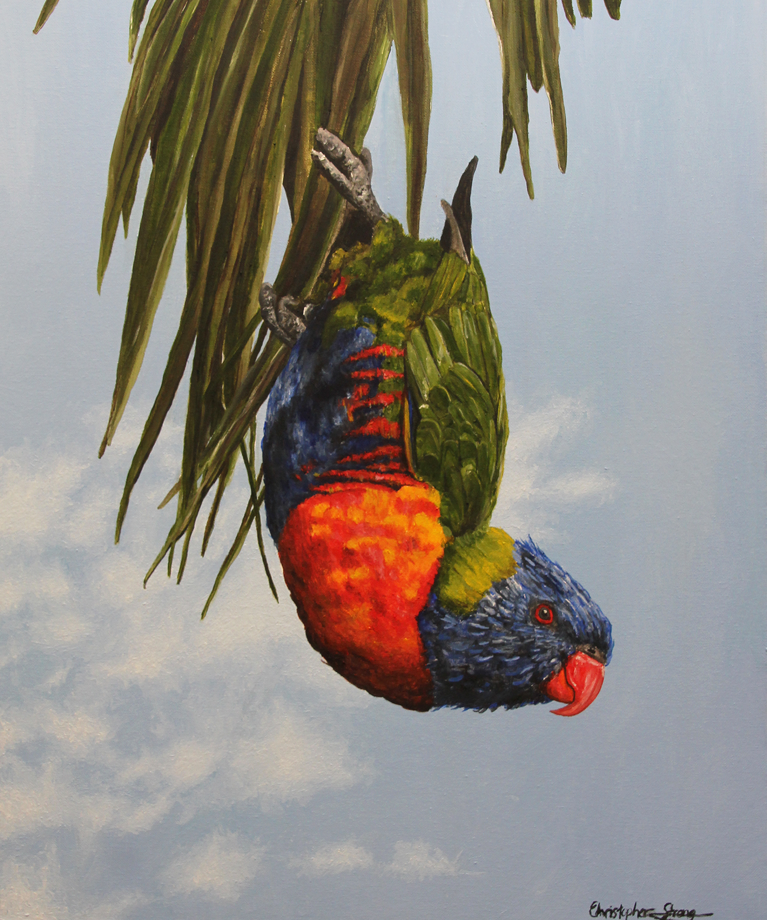 Lorikeet playing by the river - Oil on canvas - 50cm x 60cm