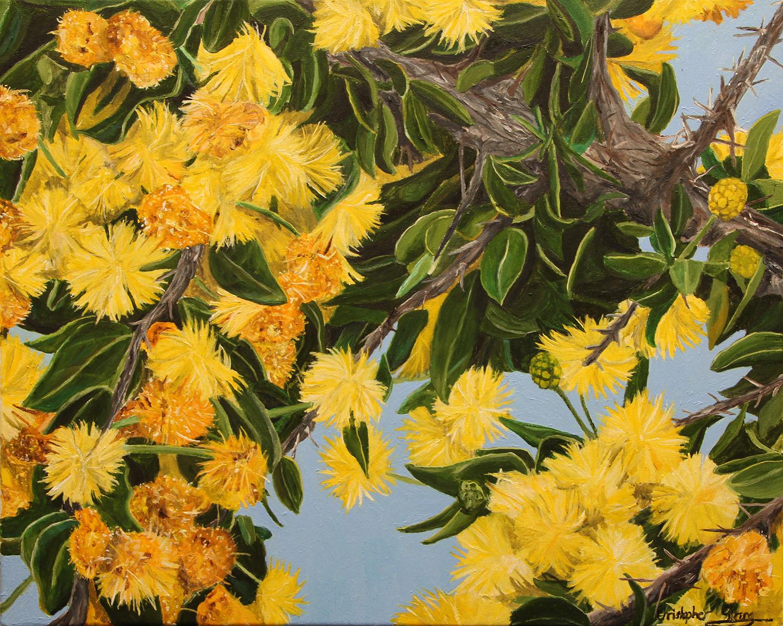 Wattle on the hilltop - Oil on canvas - 50cm x 40cm