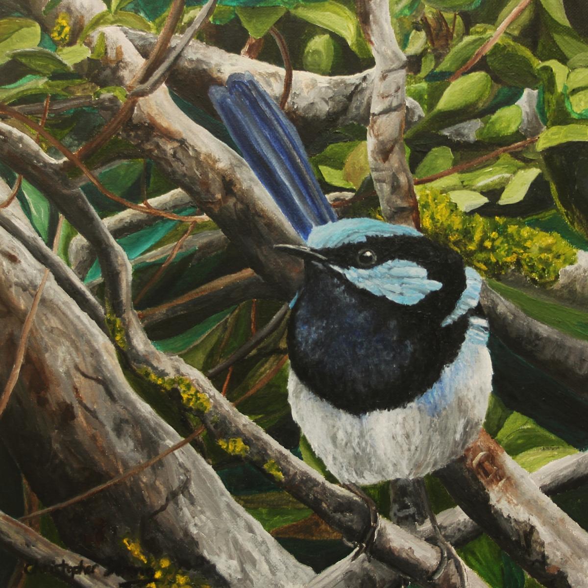 Fairy wren 1 - Oil on canvas - 30cm x 30cm