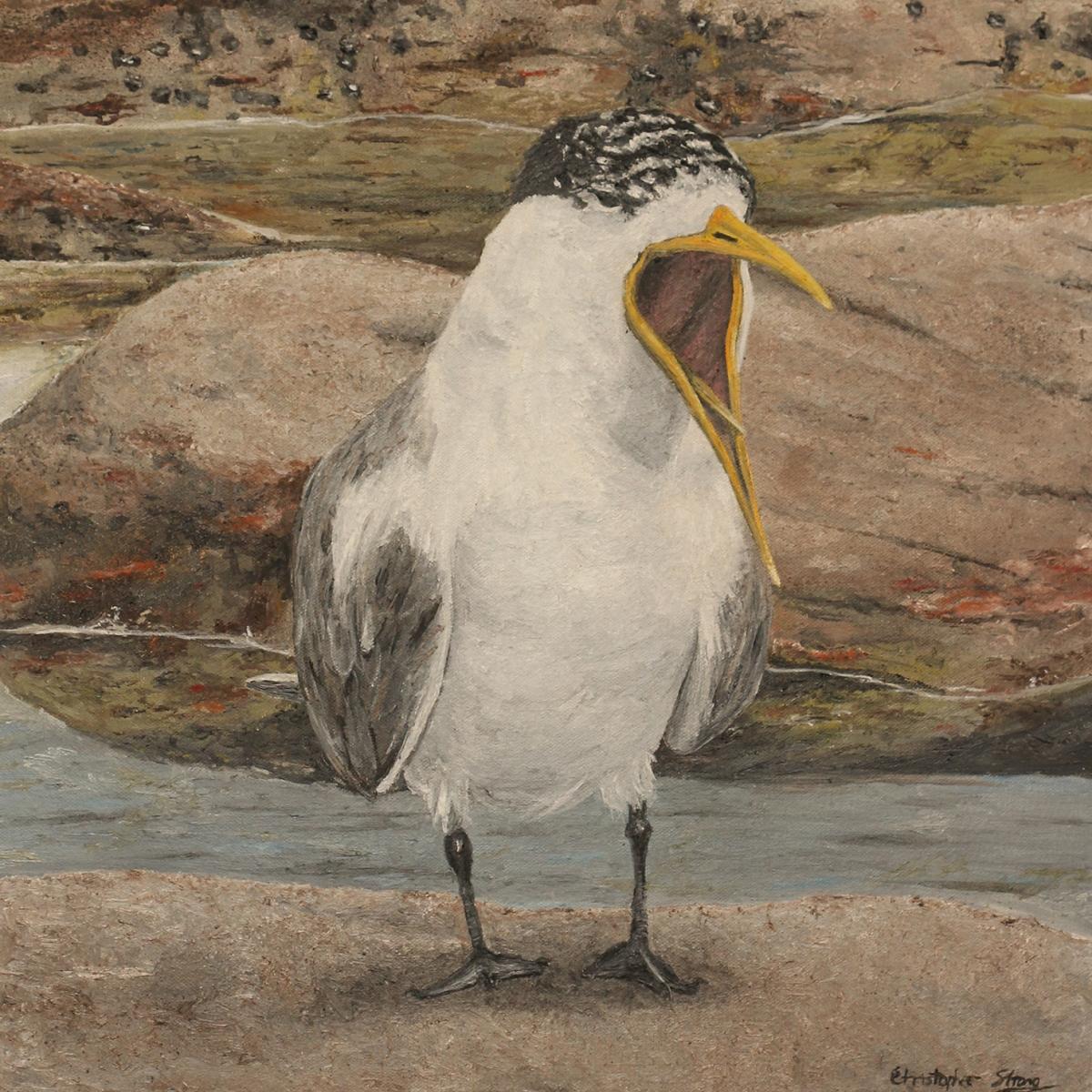 Greater Crested Tern on Sydney beach - Oil on canvas - 45cm x 45 cm